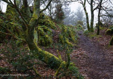 Le cheminement spirituel : choisir sa voie