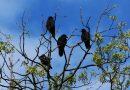 La symbolique du corbeau au travers des civilisations